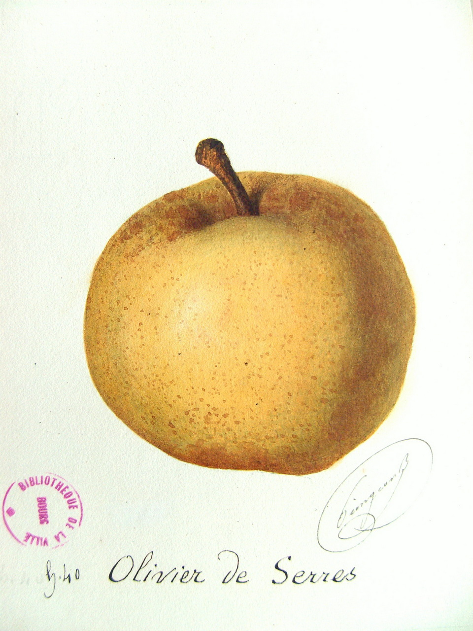 guide des poires guide of pears olivier de serres. Black Bedroom Furniture Sets. Home Design Ideas