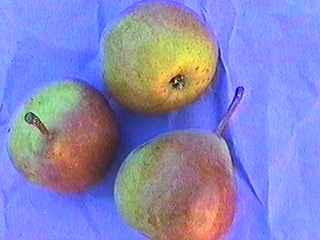 guide des poires guide of pears beurr de nivelles. Black Bedroom Furniture Sets. Home Design Ideas