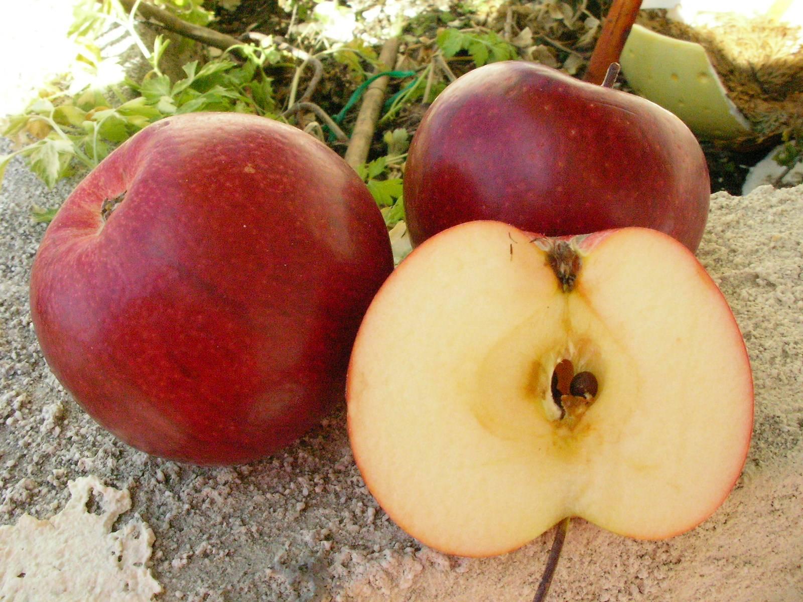 Lescrets fruits et pomologie les pommes the apples guide des pommes guide of apples 1930 - Variete pomme de terre rouge ...